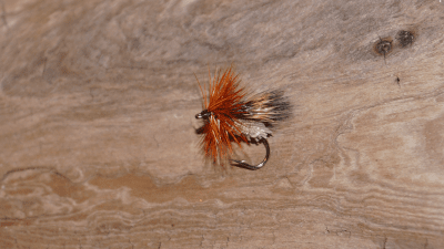 Deer Hair Sedge